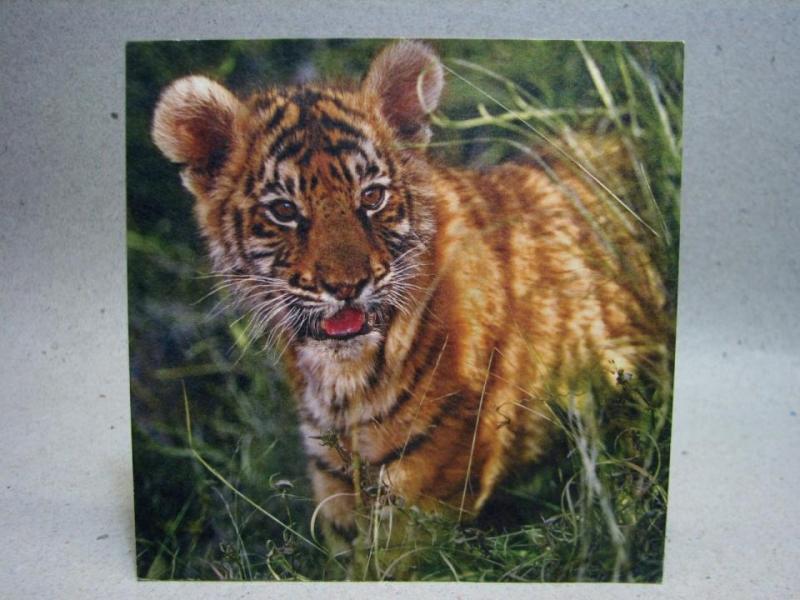 Oskrivet Vykort - Tiger